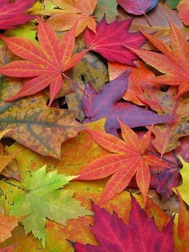 Autumn Fall, this gives me inspiration for a quilt or fleece blanket....: