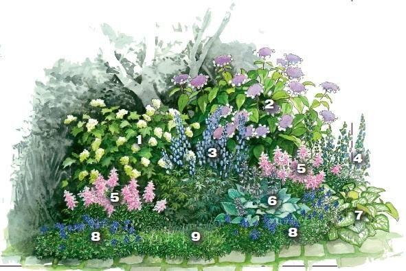 Тенистый оазис под деревом. 1 -гортензия дуболистная,  - гортензия Саржента, 3 -аконит каммарский 6 шт., 4-  аконит клобучковый 6 шт., 5- астильба Арендса (Astilbe x arendsii) 'Grete Pungel' (2x3 экз.) 6 - хоста гибридная 3 шт., 7-  бруннера крупнолистная 6 шт., 8-хохлатка высокая (Corydalis elata) 'Blue Summit' (1x5, 1x10 экз.), 9- астильба китайская карликовая 6 шт. Источник: http://www.7dach.ru/MoySad/cvetochnye-fantazii-sostavlyaem-effektnye-kompozicii-dlya-sada-21392.html#ixzz3xLThDSiH