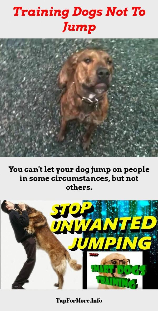 Stop Dog Jumping And Dog Training Tips Fun Check The Pic For