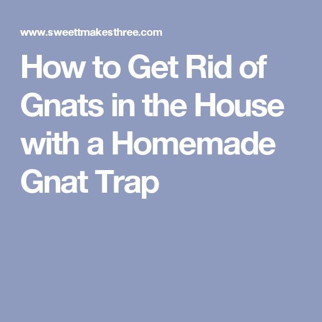 how to get rid of gnat clouds