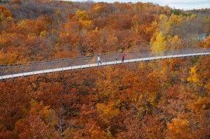 fall suspension bridge