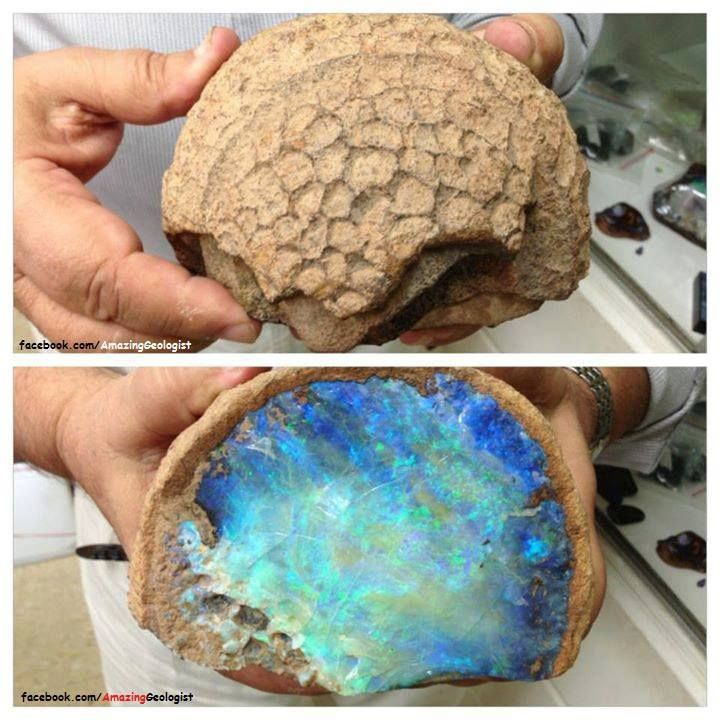 opal fossil, I will never look at a rock as just a rock anymore! #inspo #privatearts