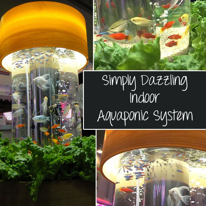 Simply Dazzling Indoor Aquaponic System - This system is simple and compact, yet a stunning example of how an aquaponic system can add an amazing artistic display piece to any indoor space while growing healthy, organic foods.