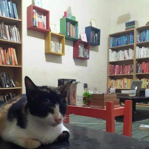 This lady is one of librarians at Katakerja. Her name is Badak.