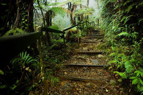 Mount Kinabalu Park, Sabah, Malaysia