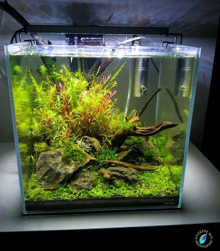 872 best aquascaping planted tanks aquariums images on for Plante nano aquarium