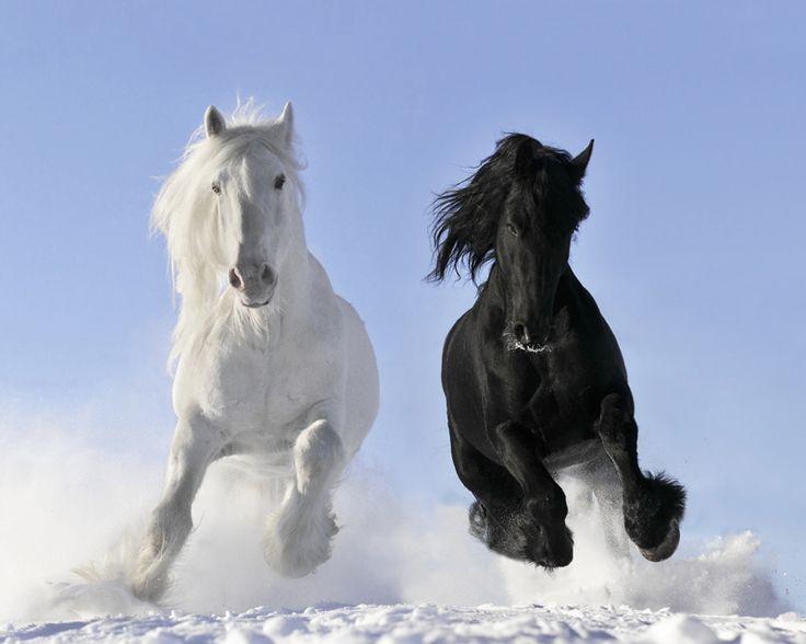 horses: Beautiful Horses, Animals, Black And White, Snow, Black White, White Horses, Black Horses, Beauty, Photo