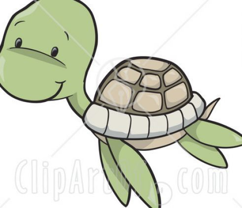 10 best Turtles images on Pinterest Cartoons Drawings and
