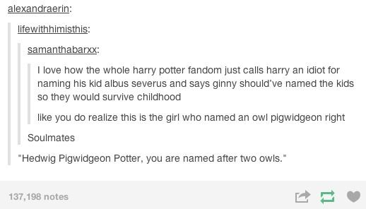 Harry Potter and the people who can't stop making jokes about him.