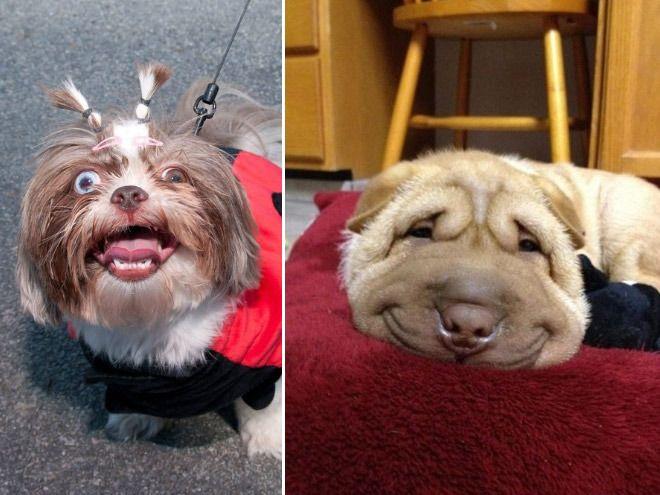 perros y sus caras chistosas