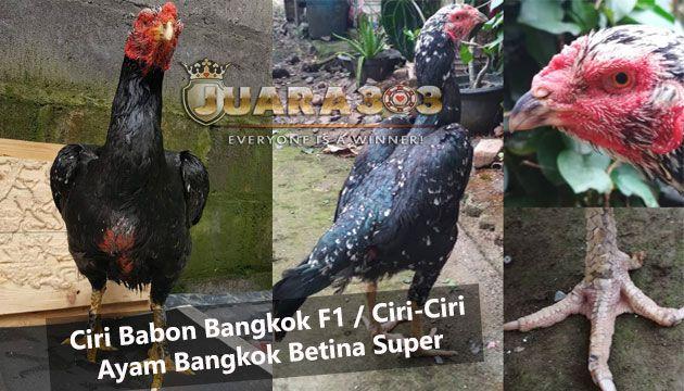 101+ Gambar Ayam Betina Vietnam Paling Keren