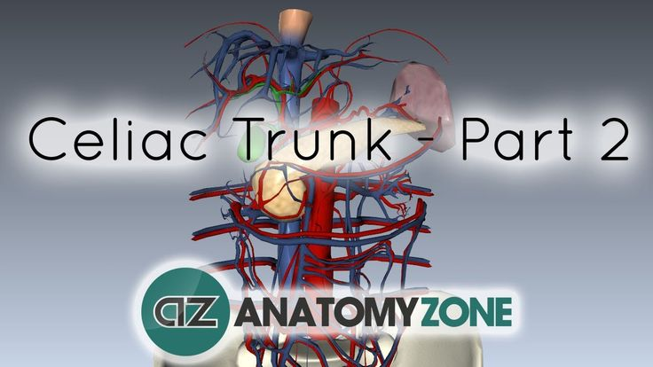 Celiac Artery/Trunk - Part 2 - Anatomy Tutorial