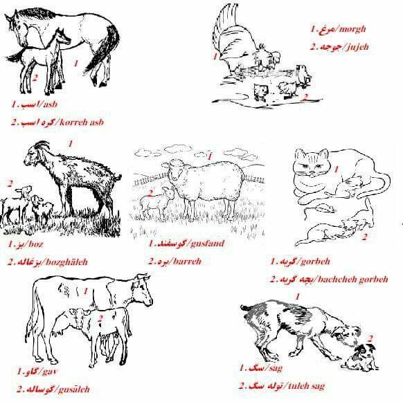 Farm animals names in Farsi