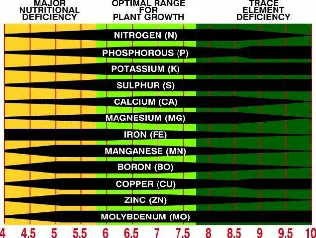 c248fc6bb45e701abc099ebe9e251049 - How Does Ph Affect Plant Growth And Gardeners Gardens