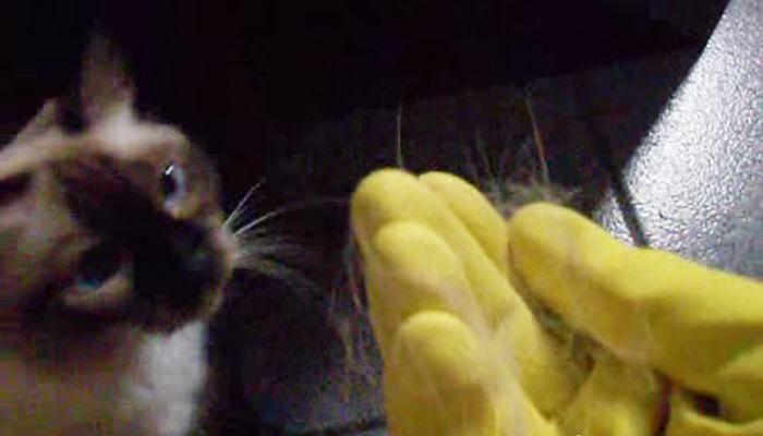 Pelos de Gato: Método ridiculamente simples e barato para removê-los