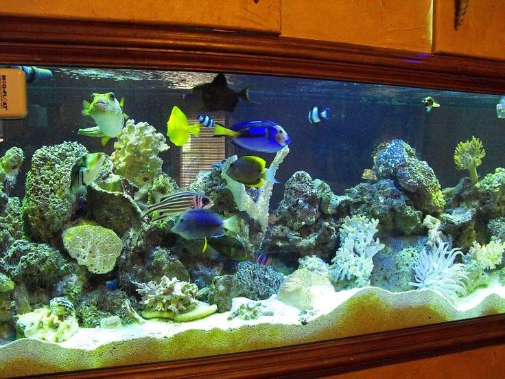 61 best images about peces y m s peces on pinterest for Spacearium aquariums