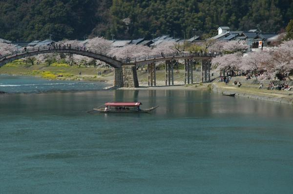 春の遊覧「さくら舟」/ひろしま観光ナビ