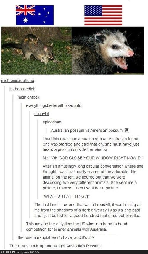 We got the wrong possum<<American opposiums are actually really cute. Their fur is wiry, but they are still really soft. There is a myth that they carry a lot of diseases, but they don't.