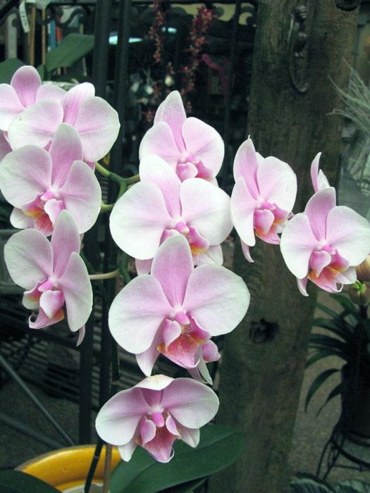 Selby Botanical Gardens. Sarasota, FL