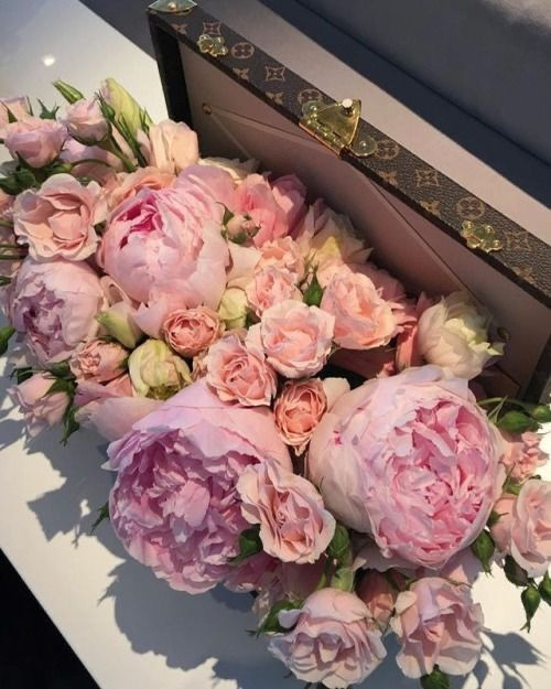 All Flowers, My Flower, Fresh Flowers, Beautiful Flowers, Peony Flower, Roses Pink, Bloom Where Youre Planted, Bloom Baby, Luxury Flowers