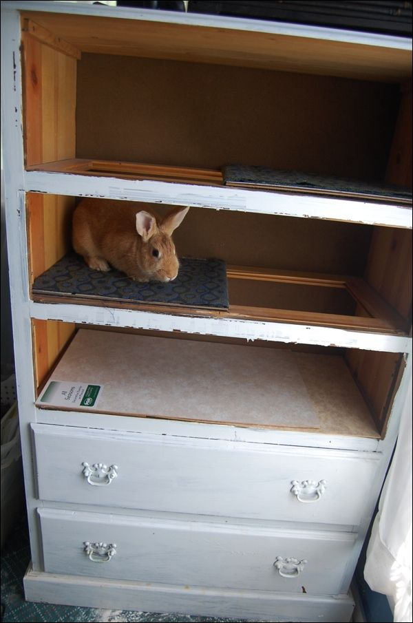 Dresser to rabbit hutch enclosure playpen burrow habitat for Rabbit cage made out of dresser