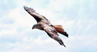 """Balance a shiatsu-ban: úton az egység felé: Laza, szabad, reménnyel teli, kreatív """"én"""""""