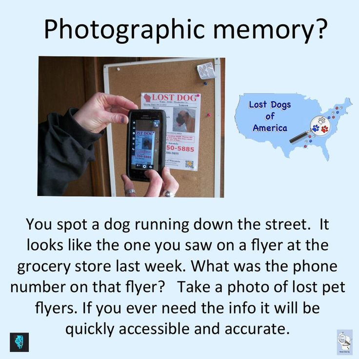 321 best Lost or Found a Pet? Tips to Help images on Pinterest - missing pet template