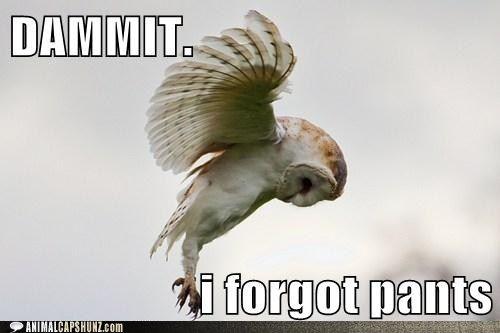 hate it when i do that.....: Animals, Zoe Radha, Beautiful, Barnowl, Flying Owl, Birds, Photo, White Owl, Barn Owls