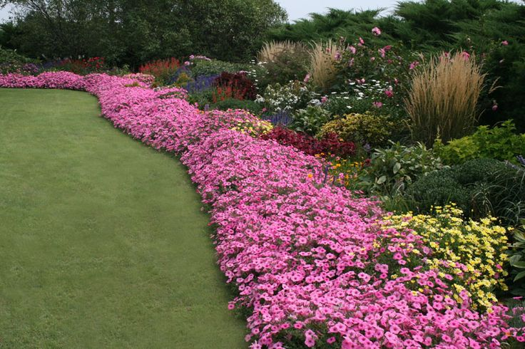 Click through the gallery below to see other examples of petunias planted in different ways in the landscape.