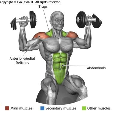 SHOULDERS - STABILITY BALL DUMBBELLS SHOULDER PRESS ... Overhead Press Muscles Worked