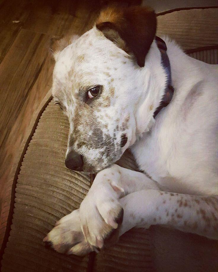 Dog Bite But Didn T Break Skin