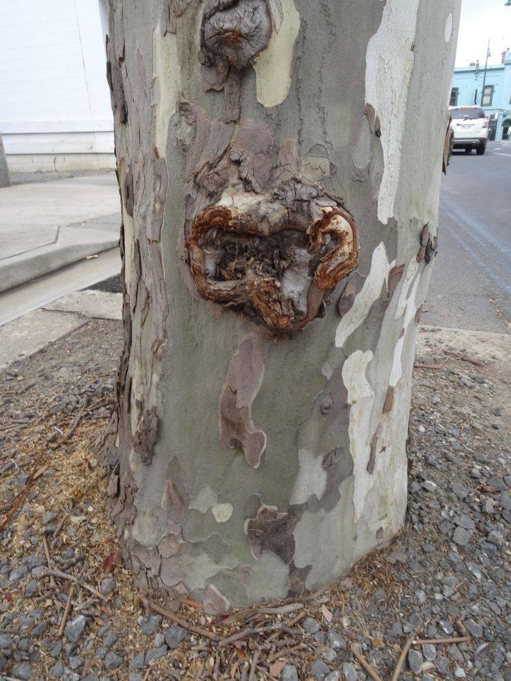 Hearts in nature .....bumpy heart on the side of a tree.
