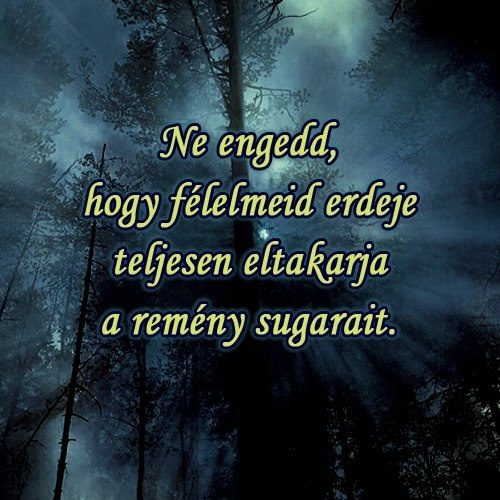 Ne engedd, hogy félelmeid erdeje teljesen eltakarja a remény sugarait. # www.facebook.com/angyalimenedek