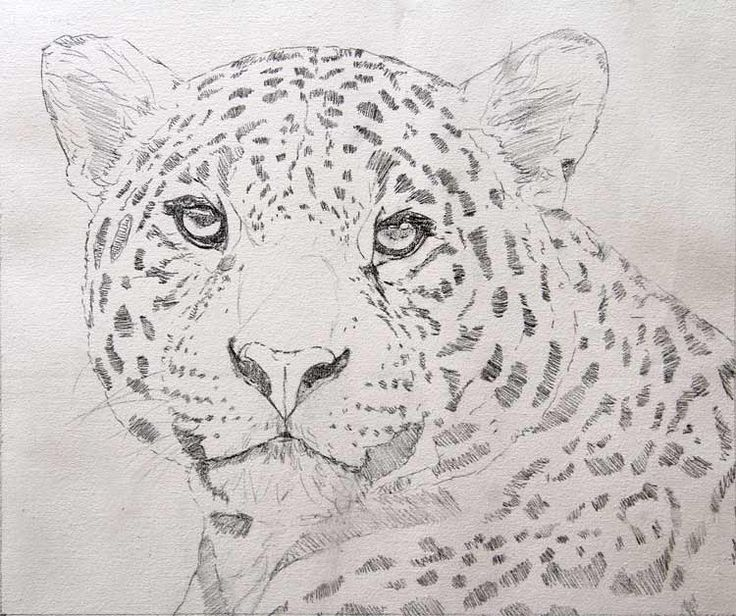 how to draw jaguar step by step google search this is where i draw the line pinterest draw