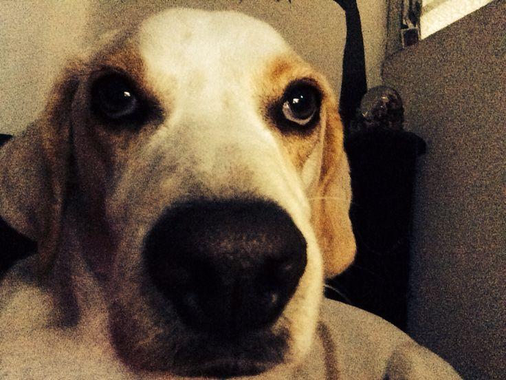 El es un perro serio #mipicasso