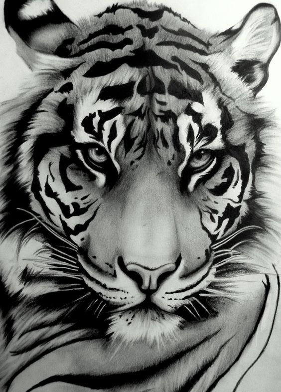 My tattoo ~ Sumatran Tiger by ~artistelllie: