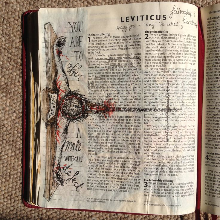 Ohne Defekt | drawcloseblog   – Bible verses
