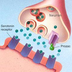 Dépression : remise en question de la théorie de la sérotonine sous-jacente aux antidépresseurs | PsychoMédia