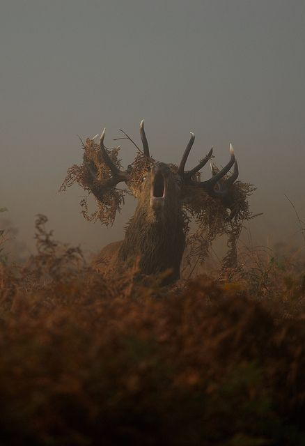 Made me do a double take- it's a moose. (edit: red stag)  thought at first it was some kind of monster...