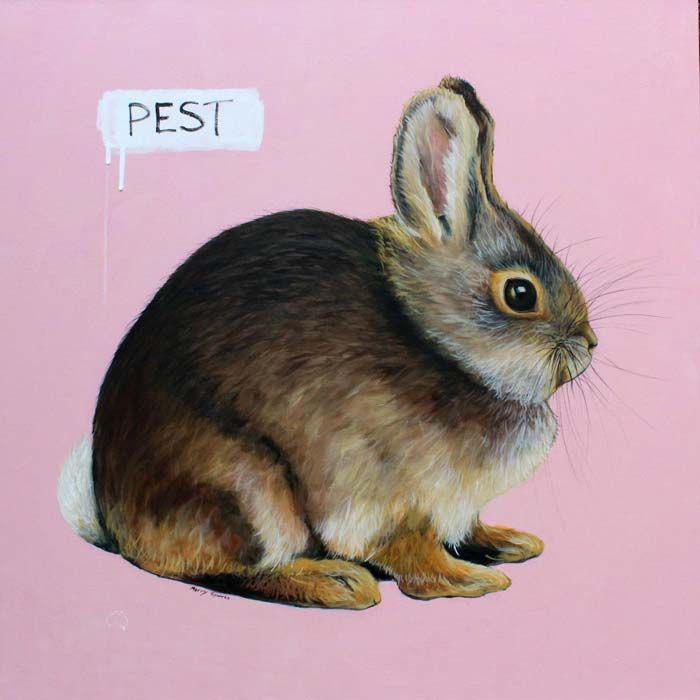"""""""Pest"""" by Merry Sparks - Oil, acrylic and graphite on linen, H100 x W100cm http://merrysparks.com/lagomorpha-leporidae-bunny/"""