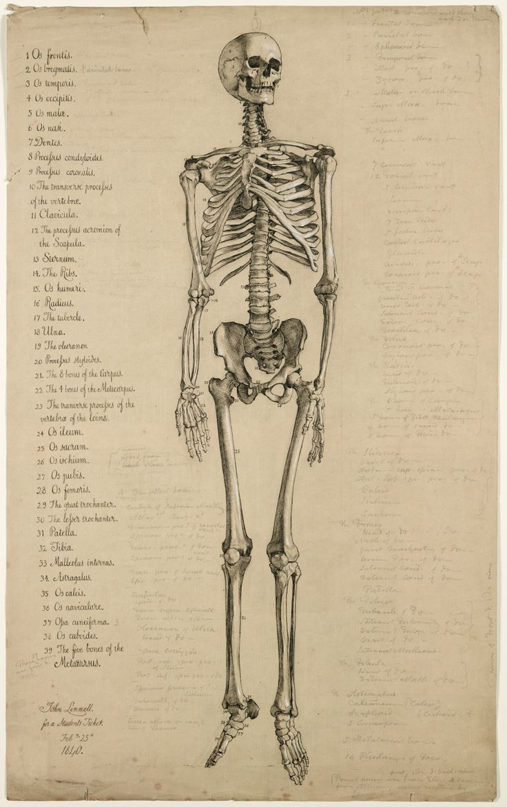 Human Anatomy Stock Images, Royalty-Free Images &amp- Vectors ...