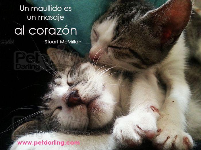 Frases Celebres Sobre Gatos Parte 3 Petdarling I Love My Sofi