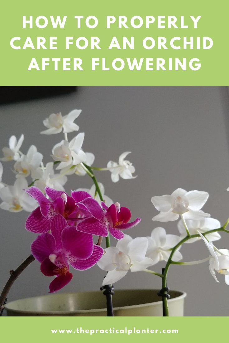 How To Properly Care For An Orchid After Flowering Orchid Care