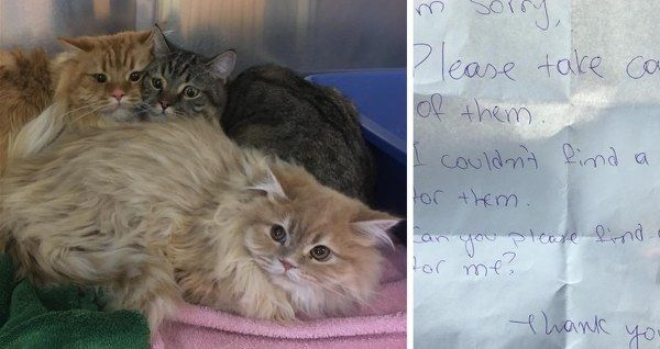 12/24/17 abandoned outside of store!- ADOPT US ! - Himalayan Cats Found Outside Store with a Note, Get Help In Time for the Holidays