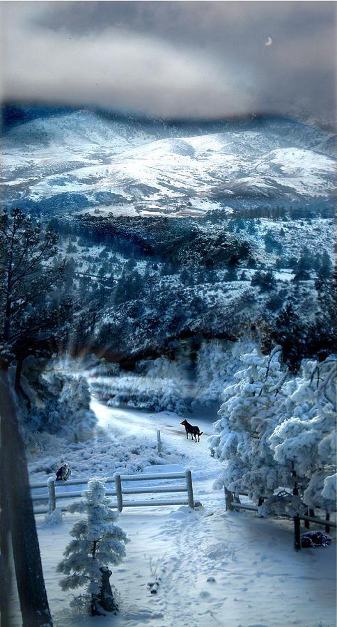 Lone dog in a beautiful winter landscape ✯