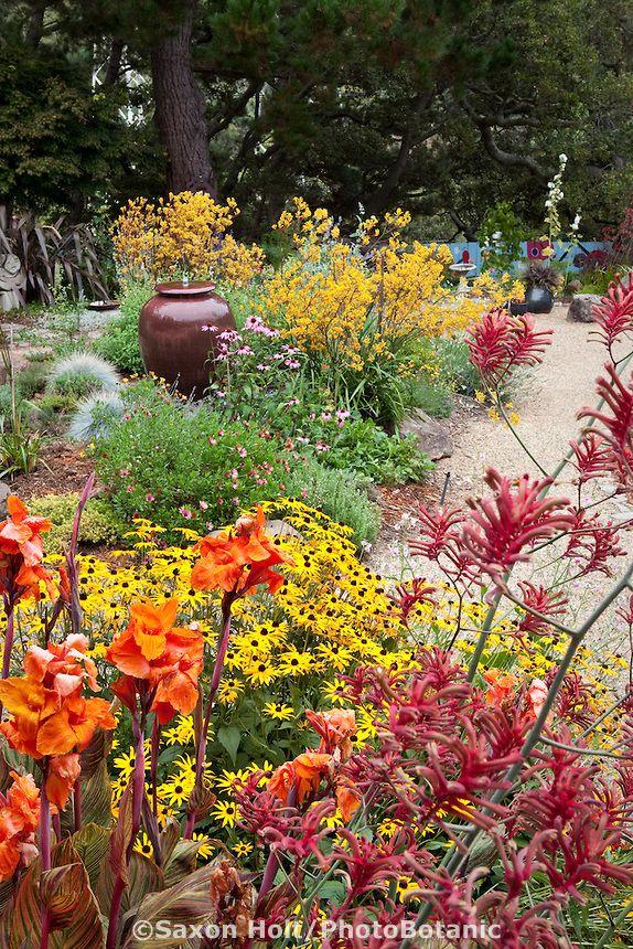 Colorful California Garden With Orange And Yellow Flower Perennials, Canna,  Anigozanthos, Rudbeckia;