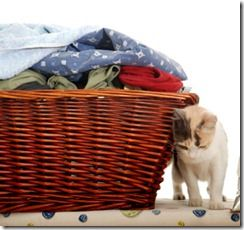 How To Remove Cat Urine From Your Laundry Vinegar And