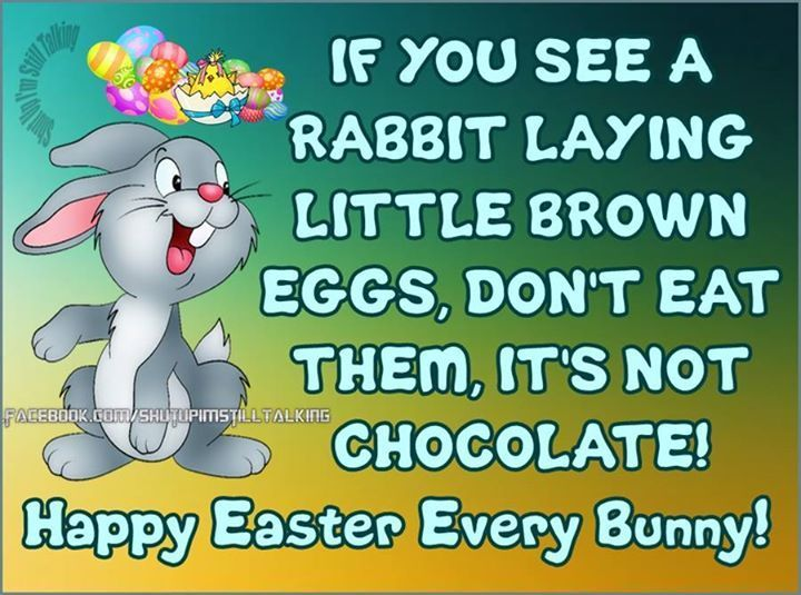 Best 25 funny easter quotes ideas on pinterest easter quotes if you see a rabbit laying brown eggs easter easter quotes easter images easter quote happy negle Gallery