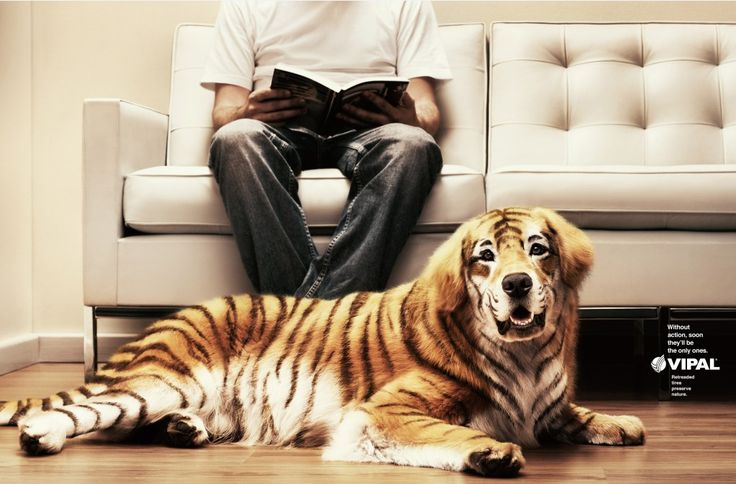 """""""Without action, soon, they'l be the only ones."""" for VIPAL. #dog #tiger #endangered #species #pets #good #ad"""