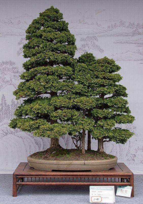 Bonsai Forest Bonsai...
